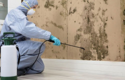 mold remediation training