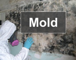 Mold Inspection & Remediation Courses